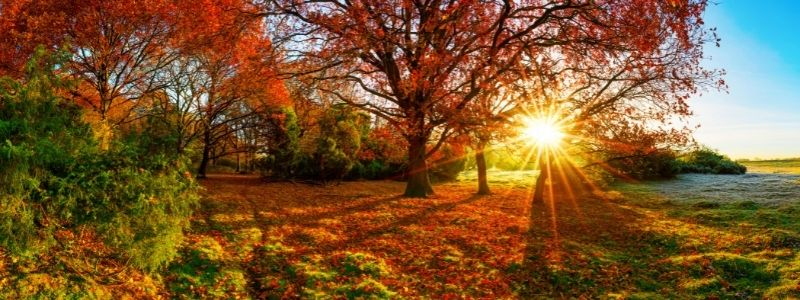 How to prepare for the winter ahead - autumn - Freeflow Plumbing and Heating